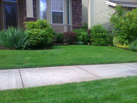 Beautiful yard maintenance. Perfectly mowed lawn in front of a yard. Clean cut edges. Modern Lawn Maintenance with green healthy lawn divided by a side walk in front of the house.