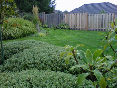 Beautifully mowed lawn in backyard. Great lawn maintenance. Trimmed hedges. Wooden fence surrounding the backyard.