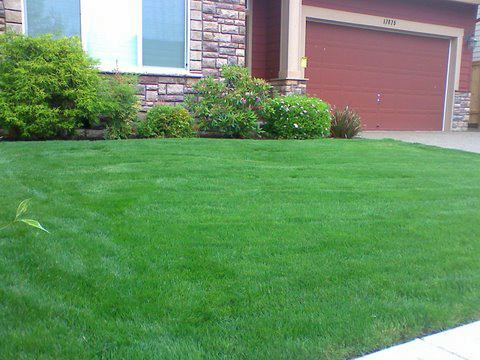 front yard well maintained, shrubs and bushes trimmed