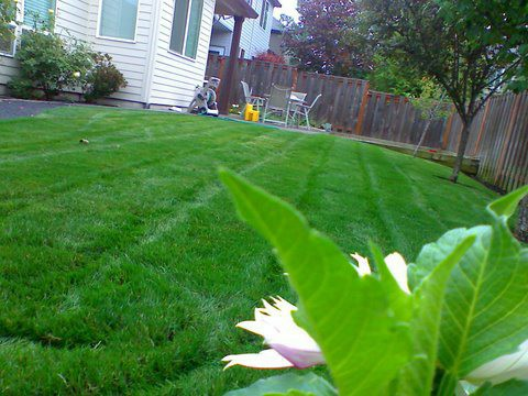 Beautiful view of a yard maintenance. perfectly mowed lawn in front of a yard. clean cut edges. Modern Lawn Maintenance with green healthy lawn divided by the sidewalk in front of the house.