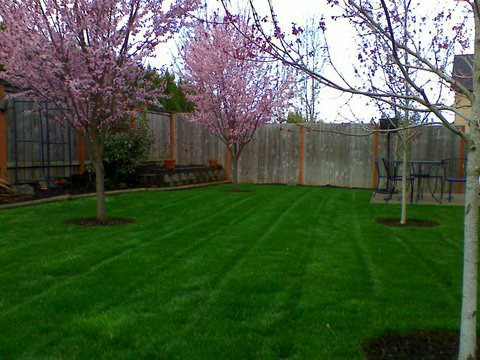 Backyard maintenance. Perfectly mowed lawn in the back of a yard. Modern Lawn Maintenance with green healthy lawn dived by a side walk in front of the house.