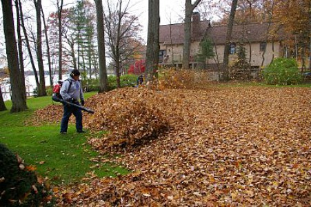 yard cleanup and removal, yard maintenance, season cleanup, fall clean up
