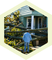 Yard cleanup, branches and debris removal