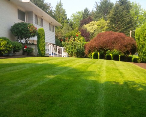 Large yard maintained and lawn moved perfectly, with a house in the background