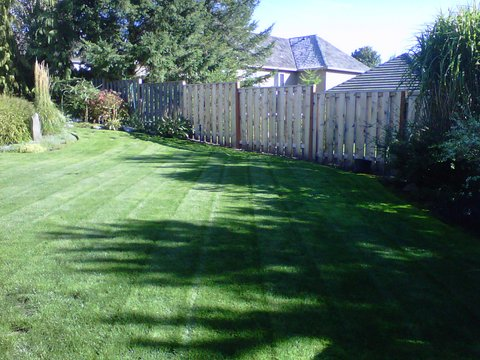 lawn mowed and maintained with a wooden fence in the back