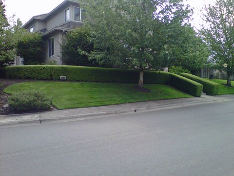 Perfectly trimmed green lawn and bushes in front yard. Modern Landscape Maintenance.