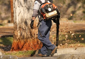 Garcia's Landscape Maintenance worker performing a lawn maintenance and yard clean up, blowing leafs
