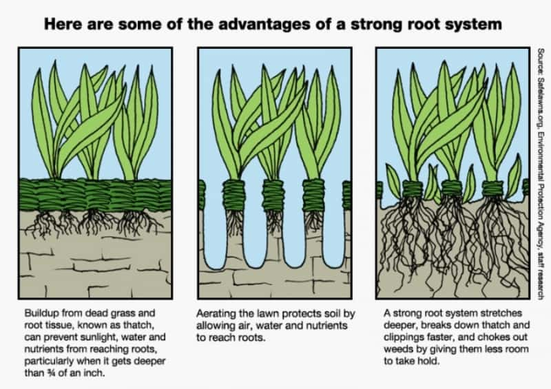 Drawing showing the advantages of doing aeration to your lawn, lawn maintenance, green lawn, healthy lawn