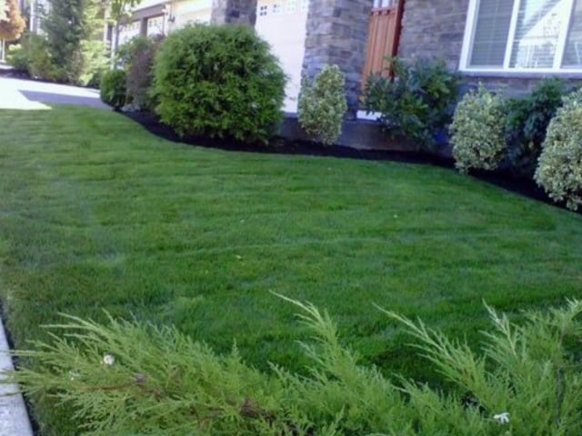 Front yard mulched, Mulching under shrubs and bushes in front yard, lawn care, mulching services